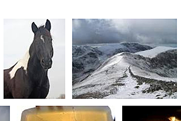 Quanta_Horse.png