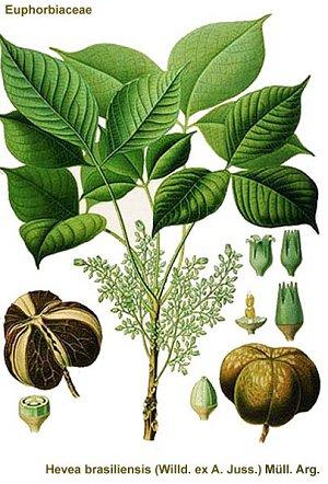 Hard/drive♢polymer-rubber-tree.MillicentHawk