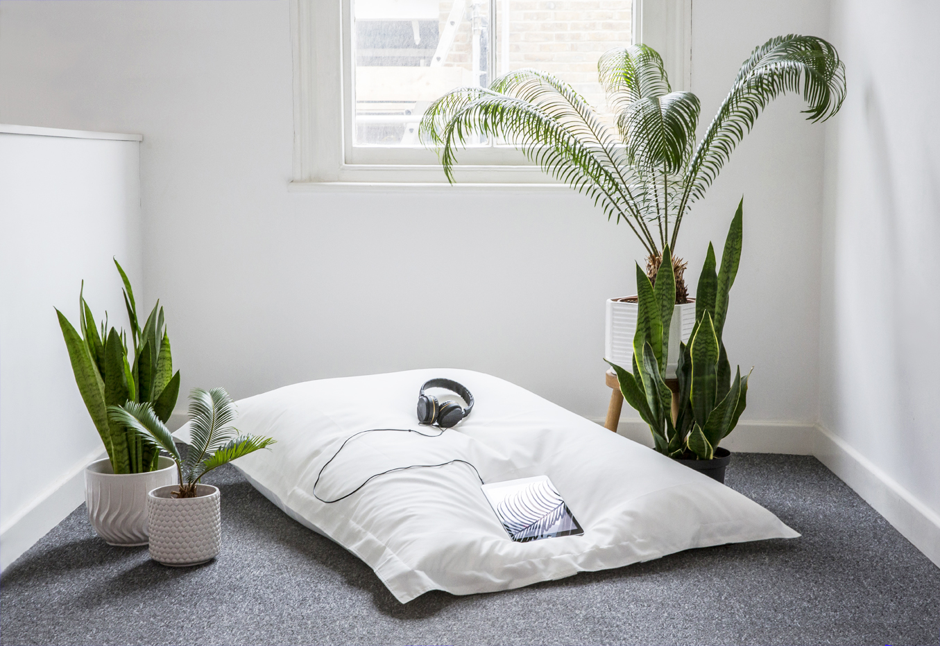 Installation view,  Hard/drive...   Lounging island comprising XL bean pillow, plants (Cycas revoluta and Sansevieria trifasciata)*, and iPad showing  Hard/drive 's website. Sansevieria - known as 'Zeylanica' Snake Plant (left) and 'Laurentii' Mother-in-Law's Tongue (right) - are highly rated by NASA Clean Air Study as air-purifiers. The additional plants in this installation are Cycas revoluta - one of the most prehistoric living seed plants on the planet.  *Plants cultivated at A V A L A N C H E - an artist-run lounge and botanical garden in Peckham - growing, planting and propagating since 2015. /// Avalanche founded by Millicent Hawk   O