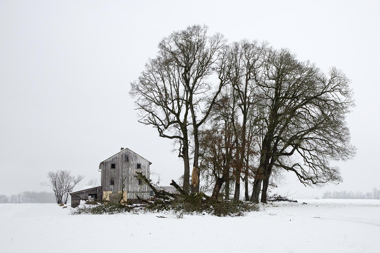 Tree 7796.jpg