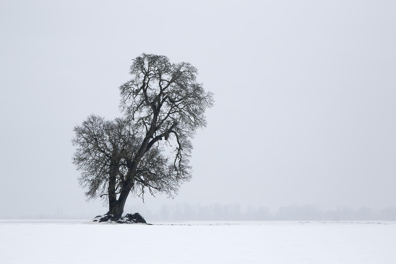 Tree7736.jpg