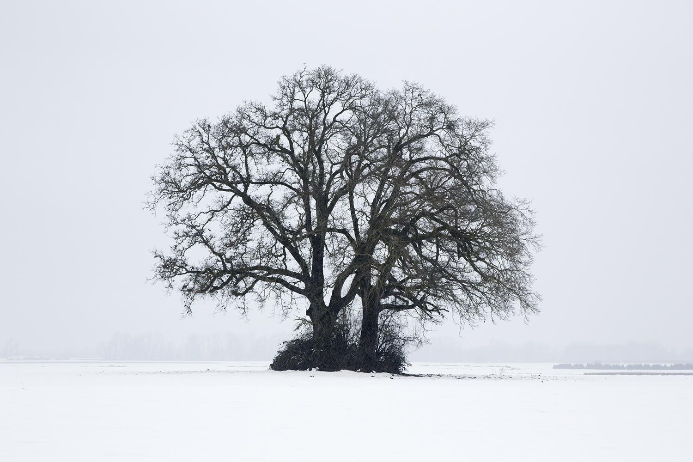 Trees 7731.jpg