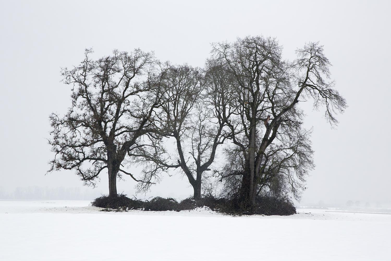 Trees 7755.jpg