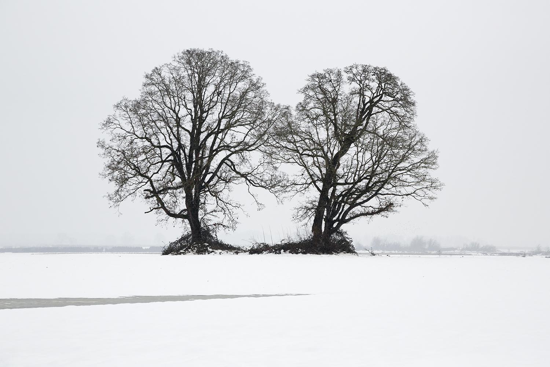 Trees 7761.jpg
