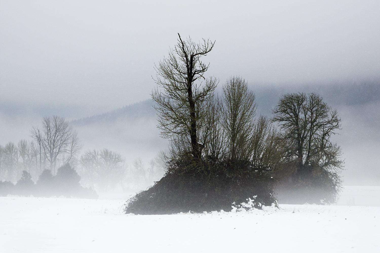 Trees7377.jpg