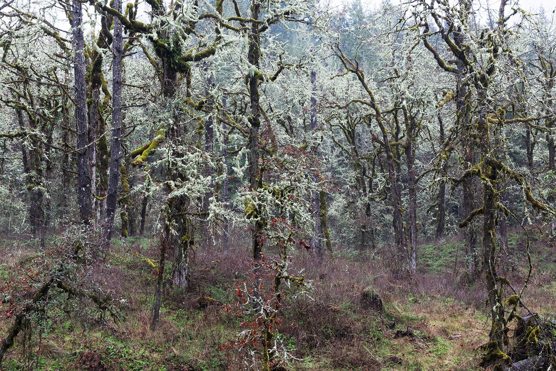 Trees 5405.jpg