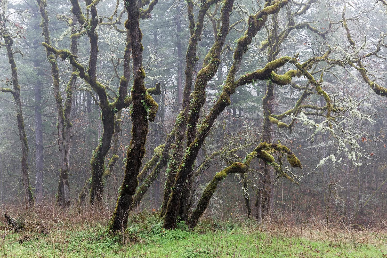 Trees 5450_.jpg