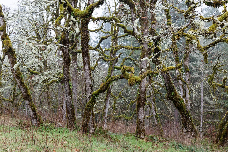 Trees 6780.jpg