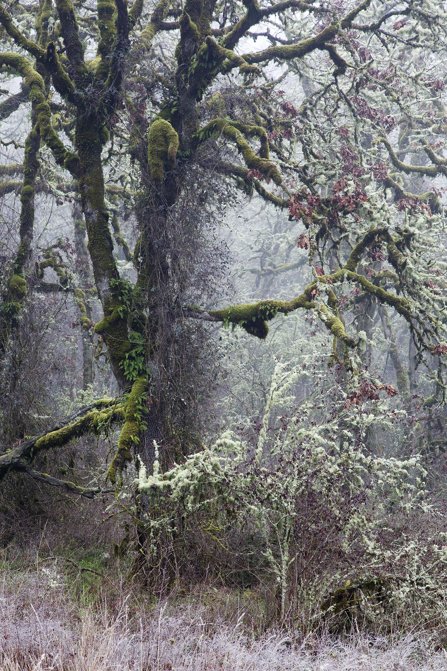Trees A6611.jpg
