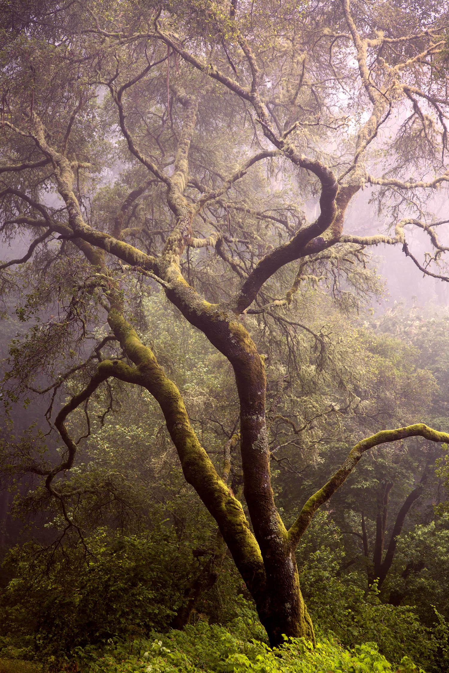 Tree 2665.jpg