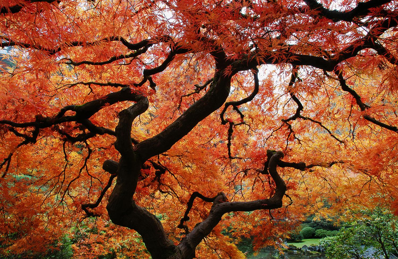 Under Maple Tree.jpg