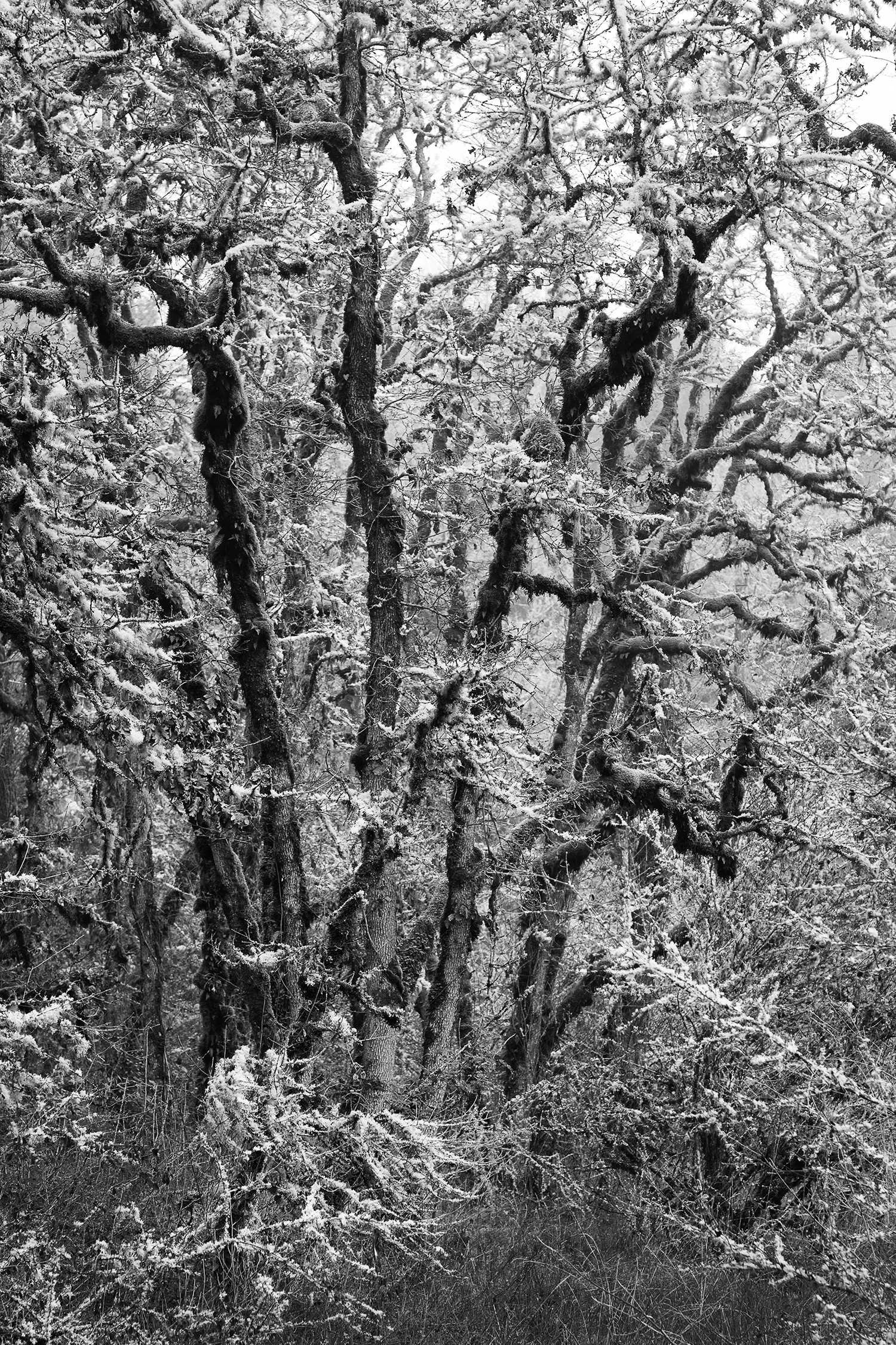 Trees 6665 B&W.jpg