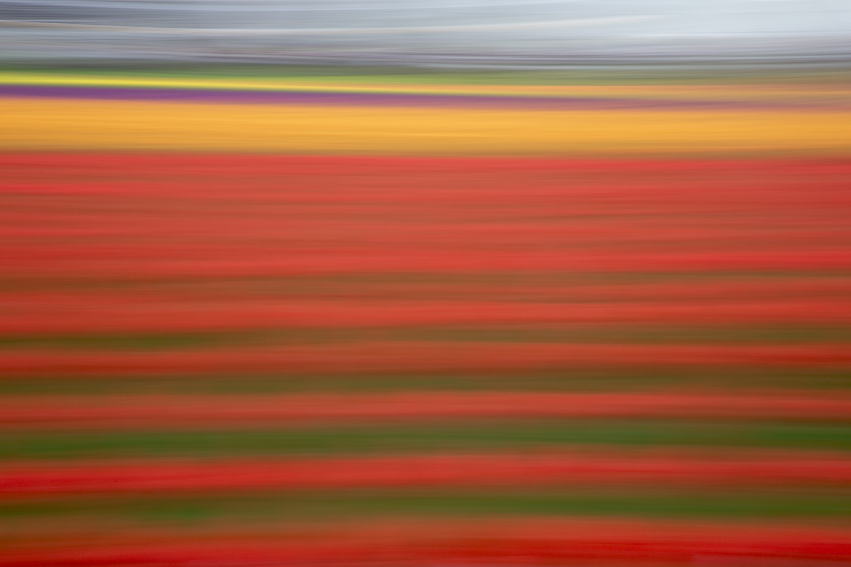 Tulip 4888.jpg