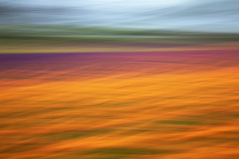 Tulip5003.jpg
