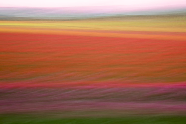 Tulips 4754.jpg