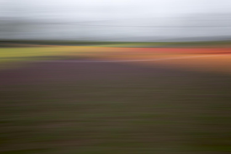 Tulips 4793.jpg