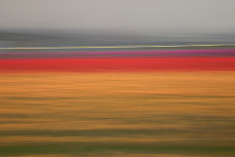 Tulips 4843.jpg