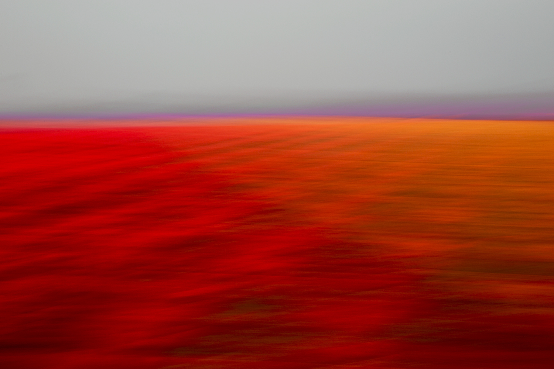 Tulips 5002 2.jpg