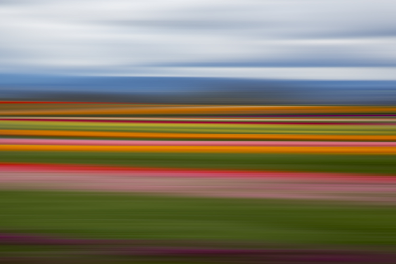 Tulips 5476.jpg