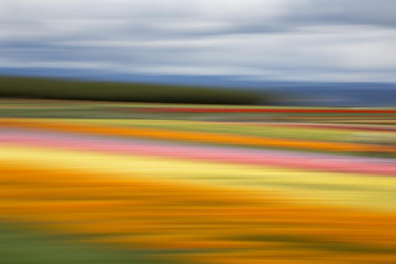 Tulips 5496.jpg