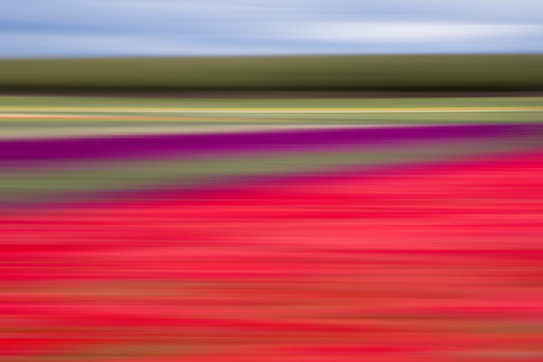 Tulips 5882.jpg