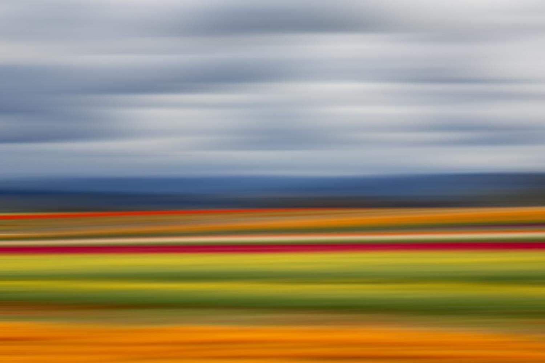 Tulips 6516.jpg