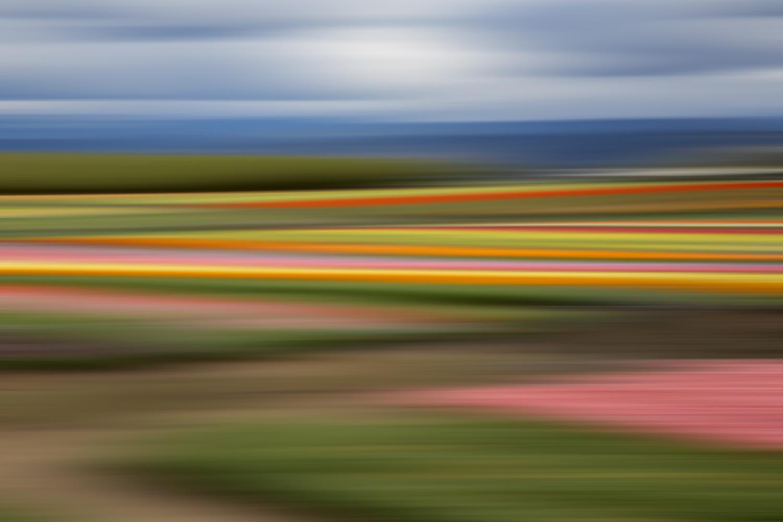 Tulips 6584.jpg