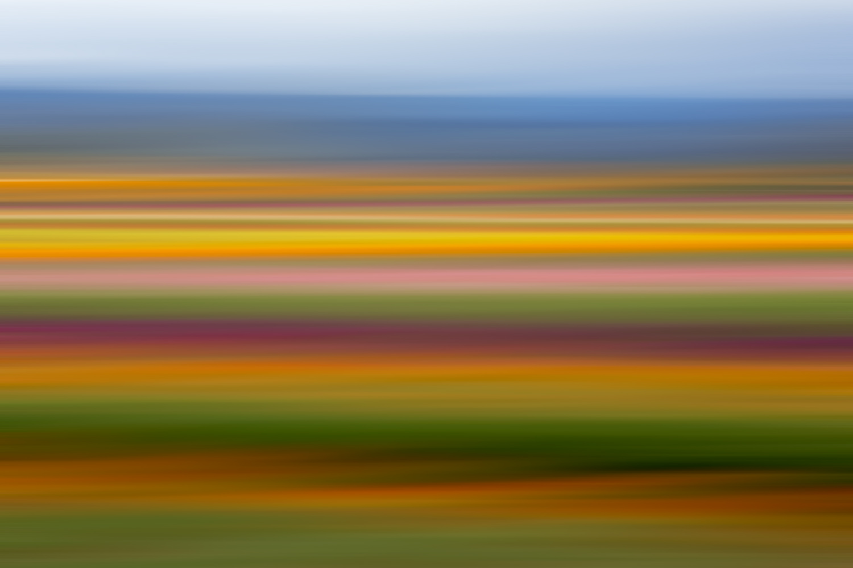 Tulips 6589.jpg