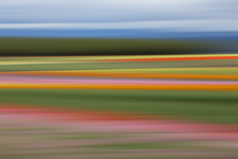 Tulips 6622.jpg