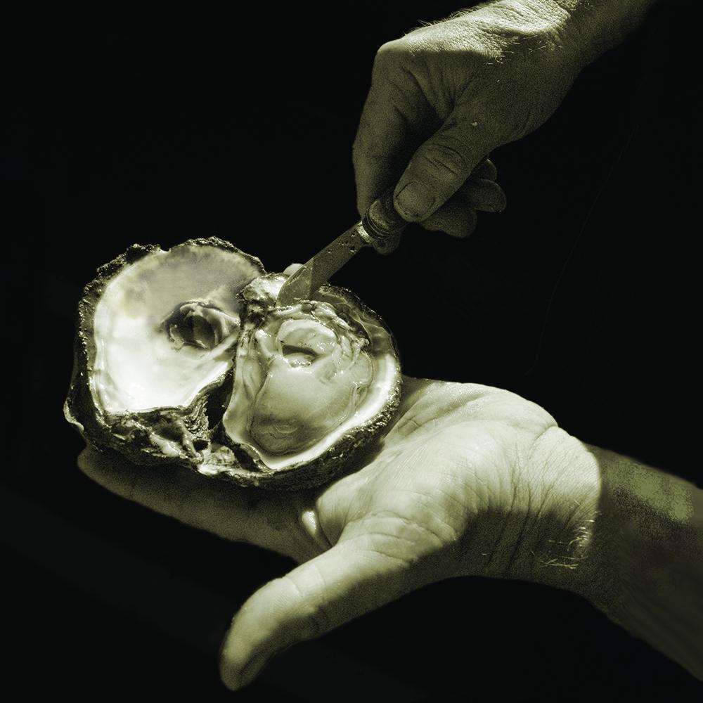 oyster_apo.jpg