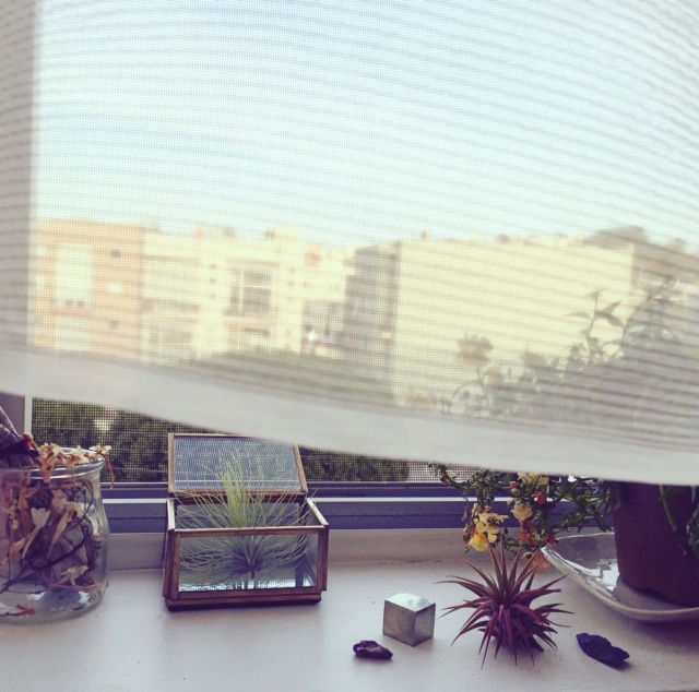 windowsill pic sp.jpg
