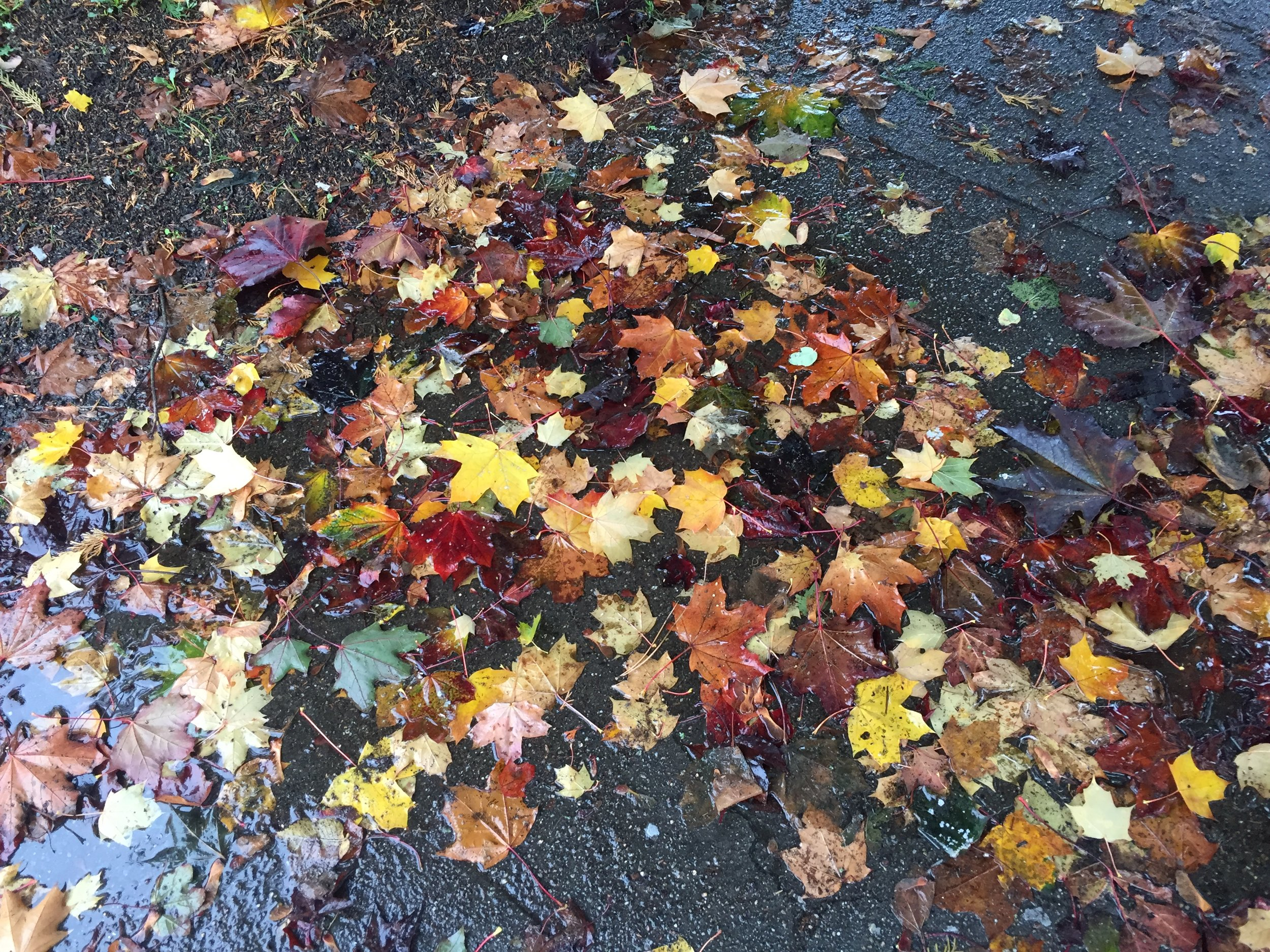 Leaves on my walk around the block. Tiny victories.
