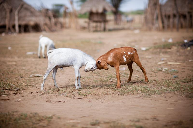jessicadavisphotography.com | Jessica Davis Photography | Portrait Work in Ethiopia | Travel Photographer | World Event Photographs _ (32).jpg