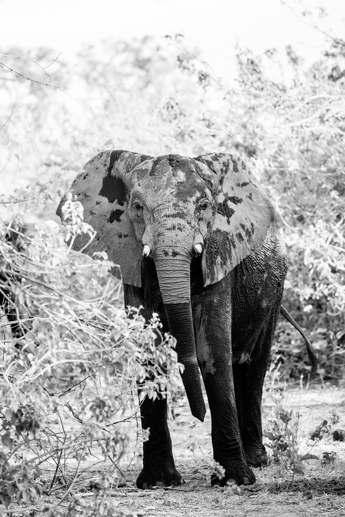 2018JDP_Botswana-18.jpg