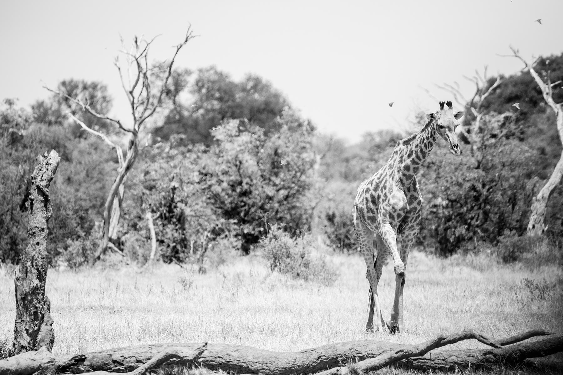 2018JDP_Botswana-60.jpg