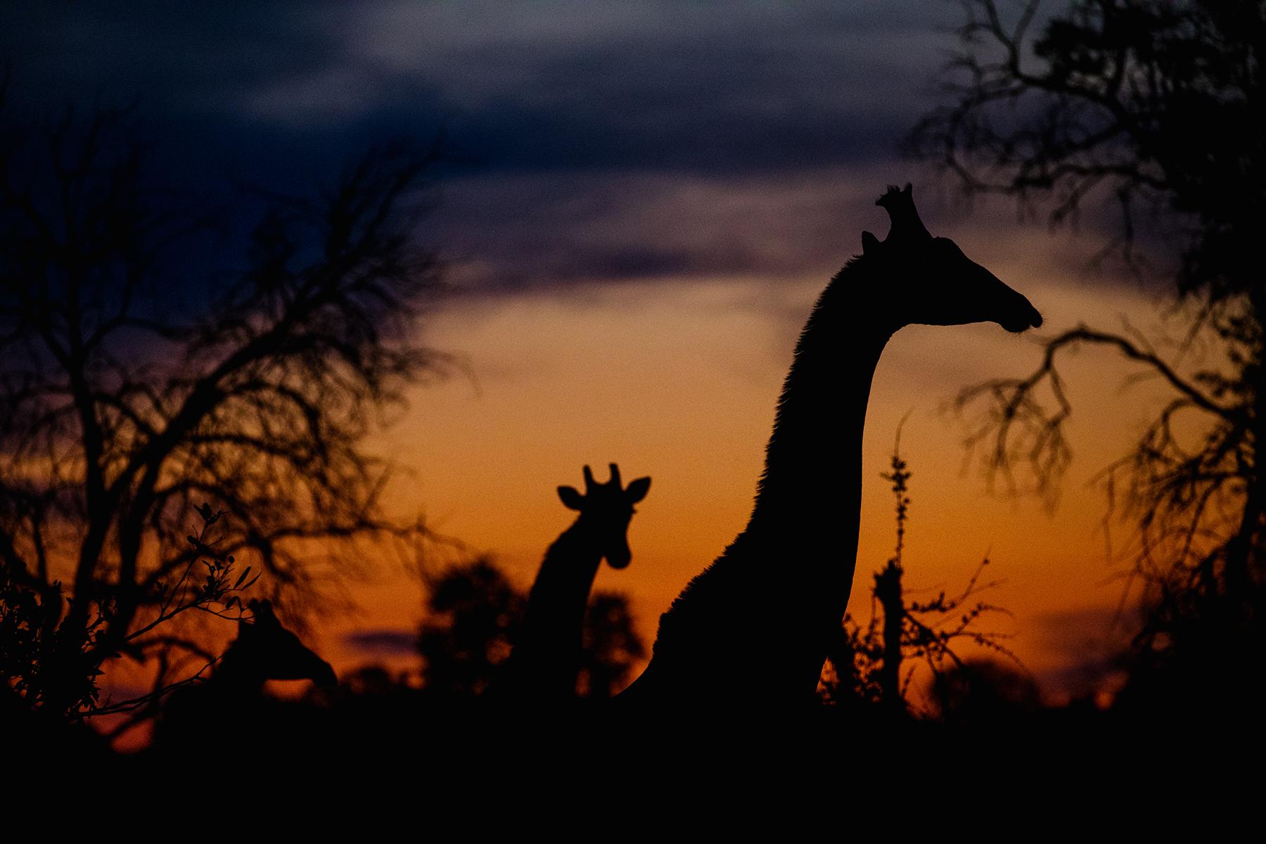 2018JDP_Botswana-69.jpg