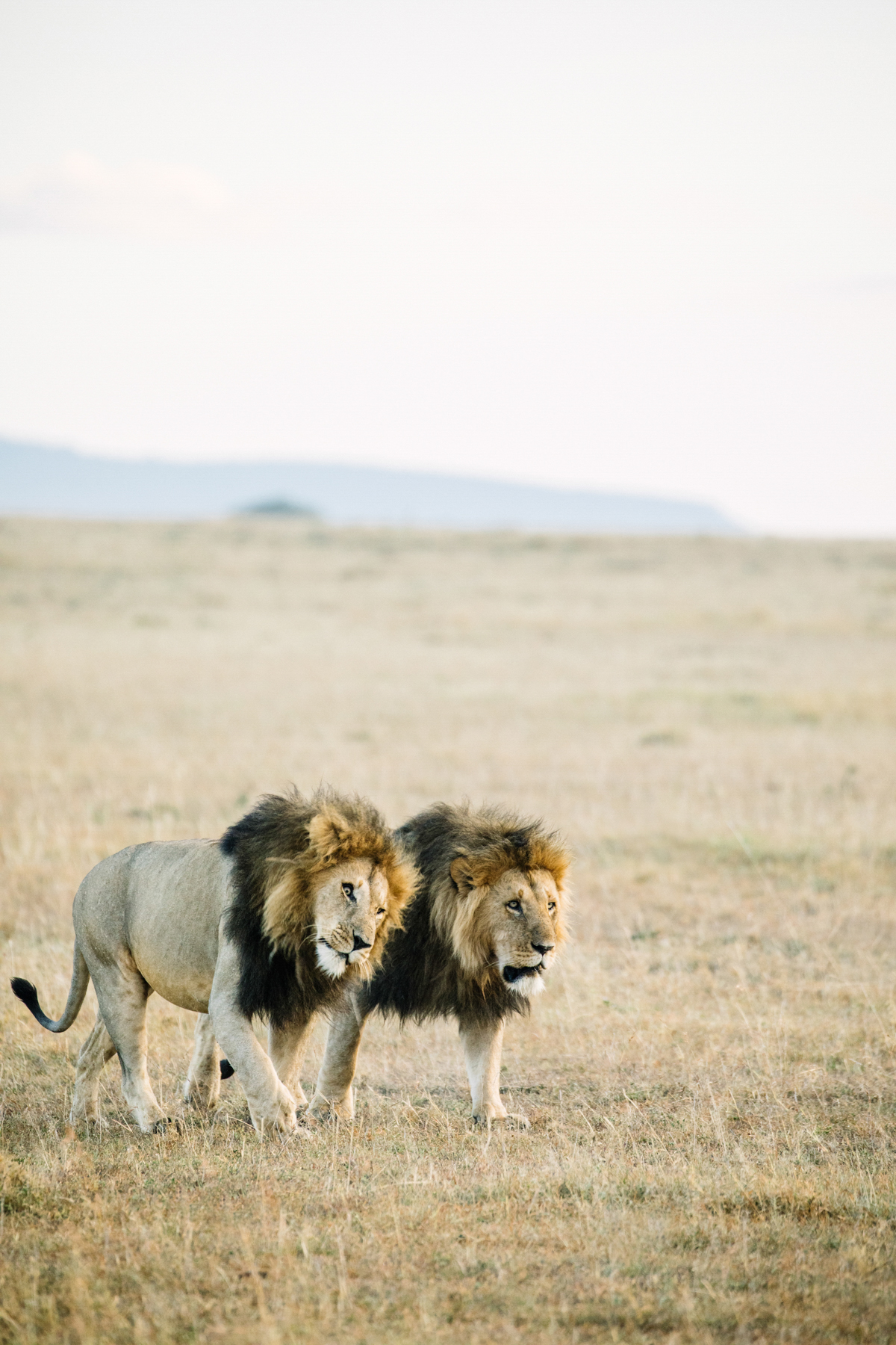 KenyaFeb2019_Safari-232.jpg