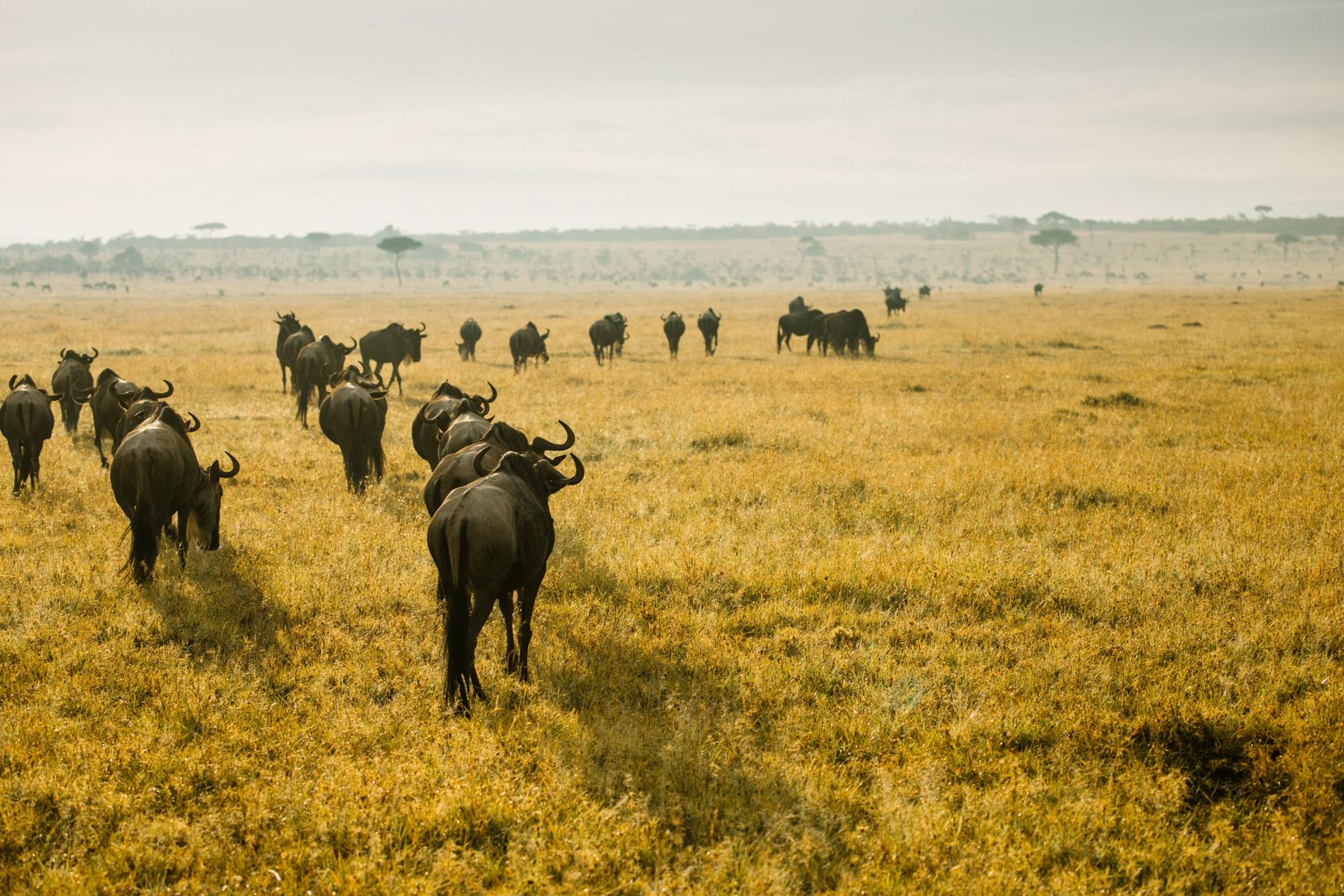 KenyaFeb2019_Safari-72.jpg