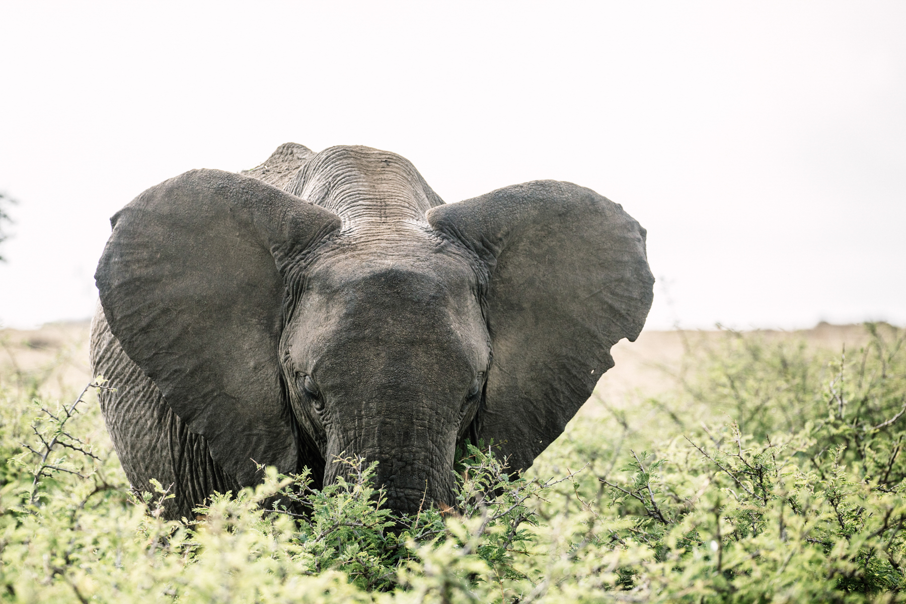KenyaFeb2019_Safari-159.jpg