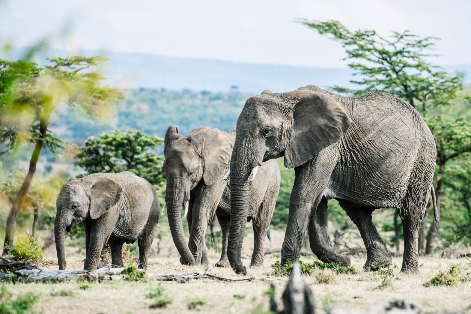 KenyaFeb2019_Safari-165.jpg