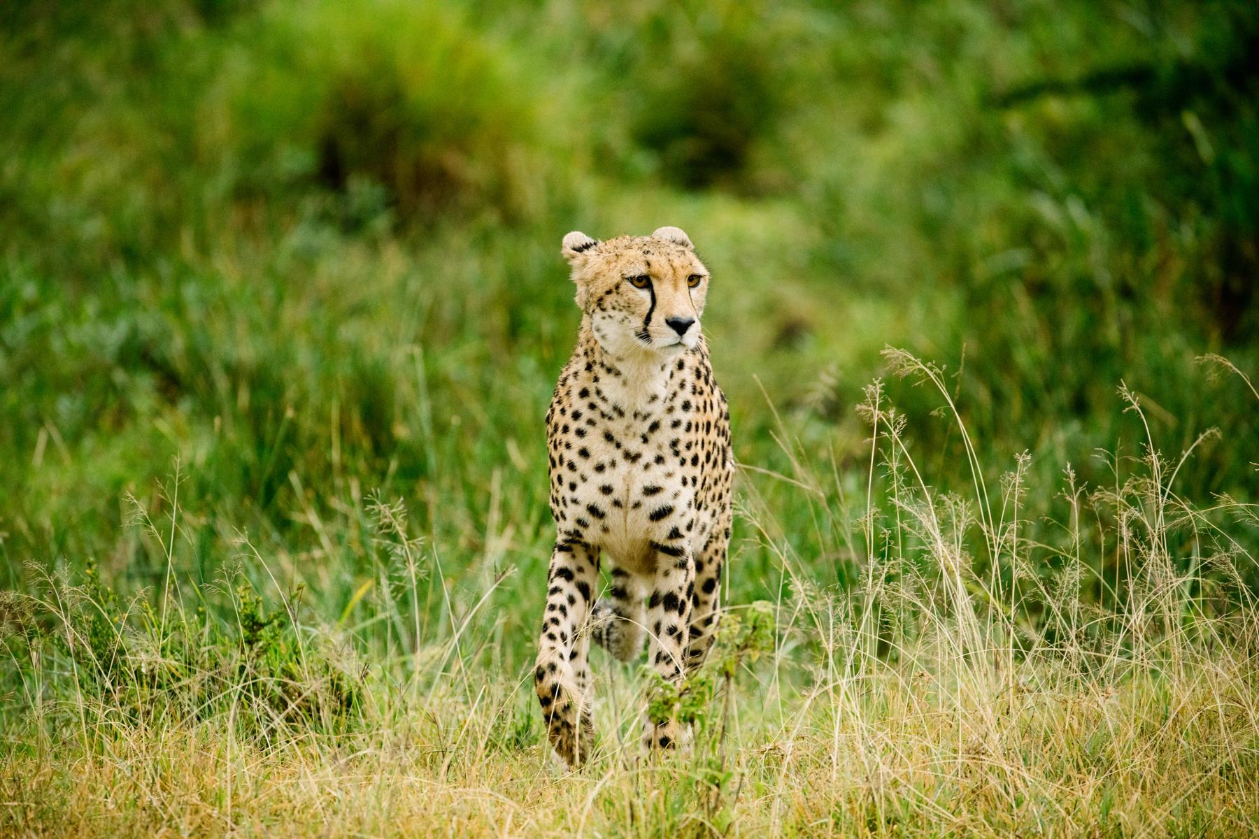 KenyaFeb2019_Safari-140.jpg