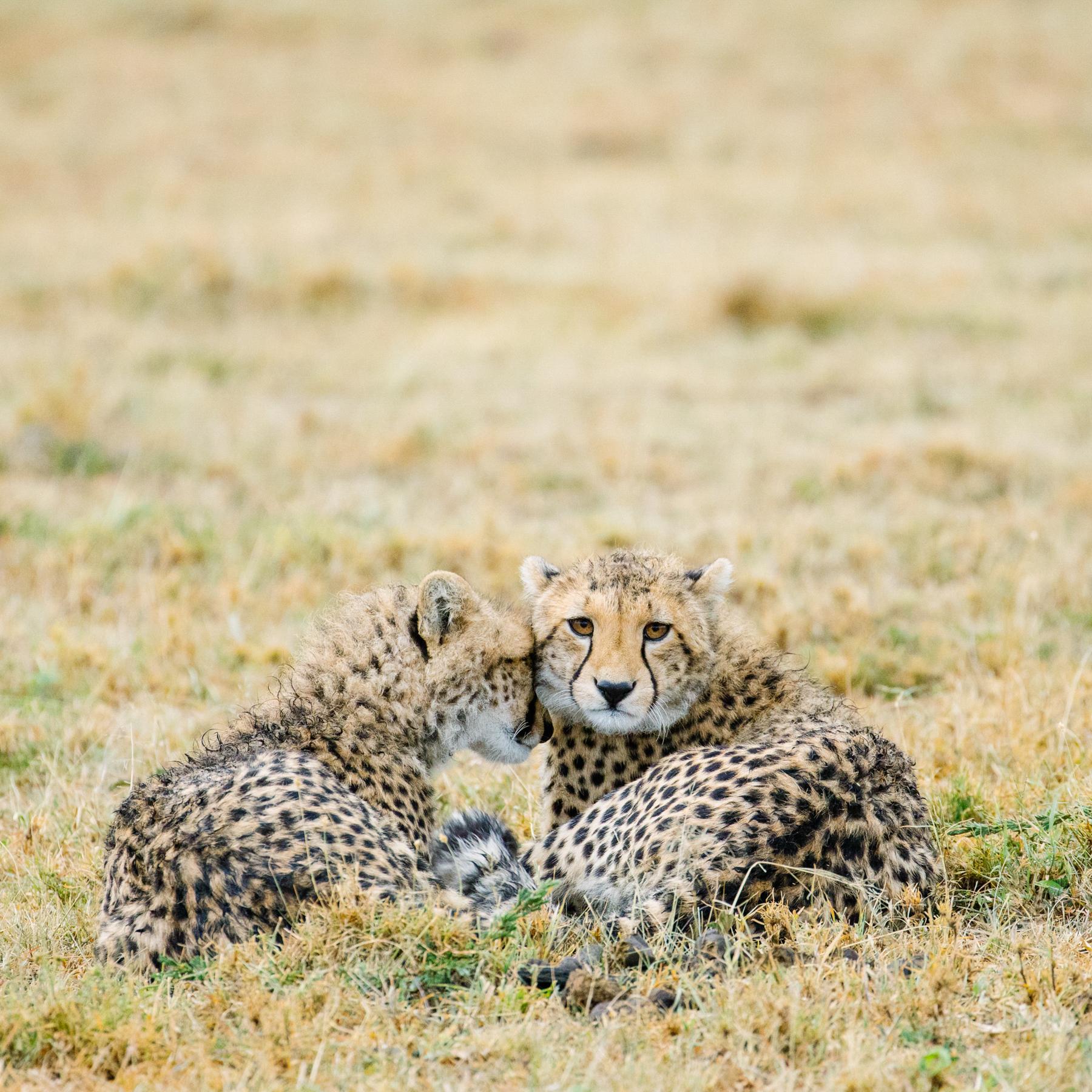 KenyaFeb2019_Safari-148.jpg