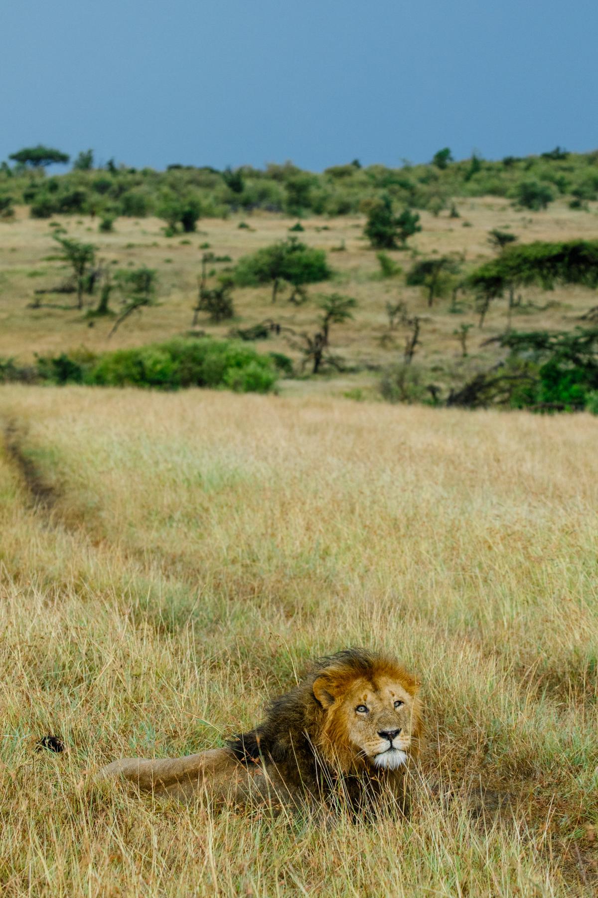 KenyaFeb2019_Safari-241.jpg