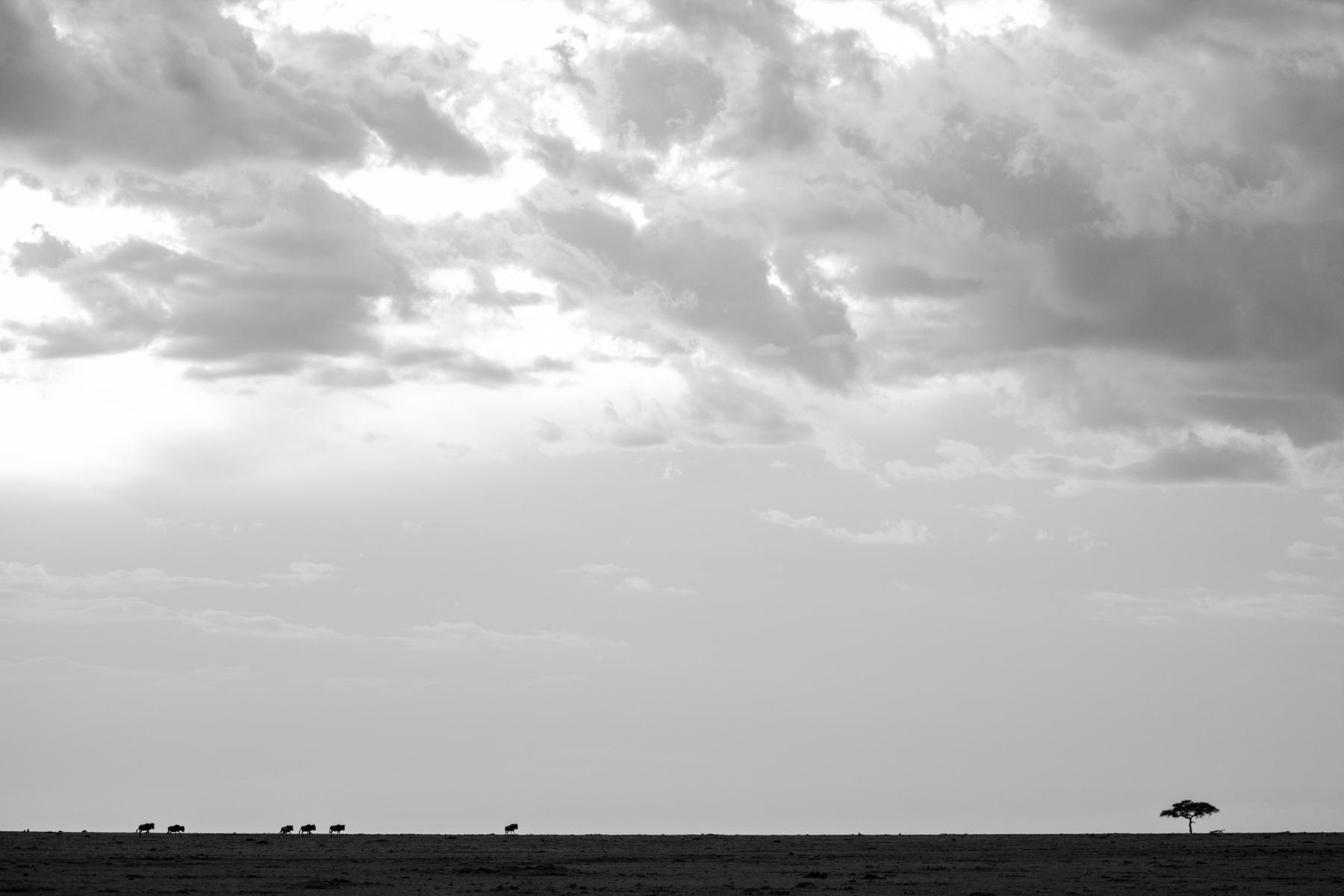 KenyaFeb2019_Safari-43.jpg