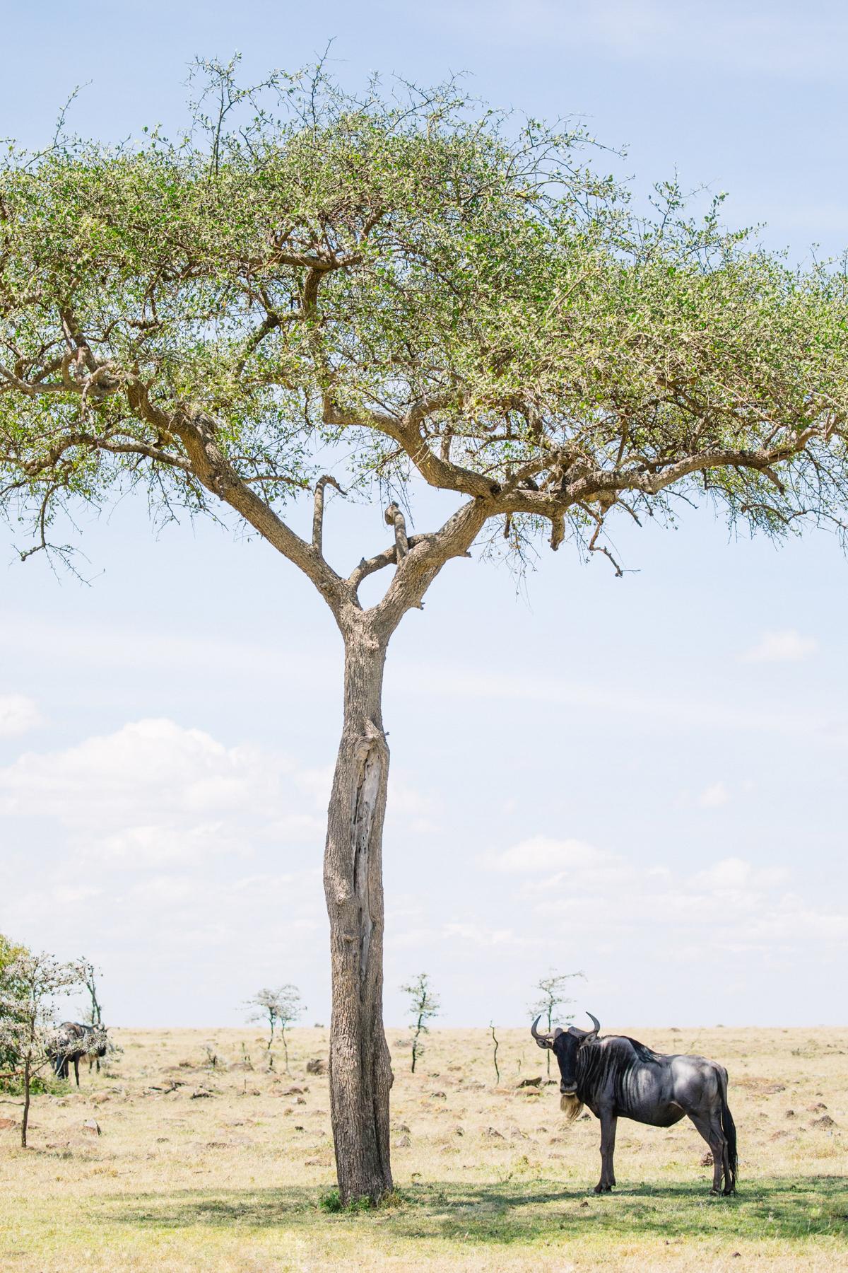 KenyaFeb2019_Safari-70.jpg