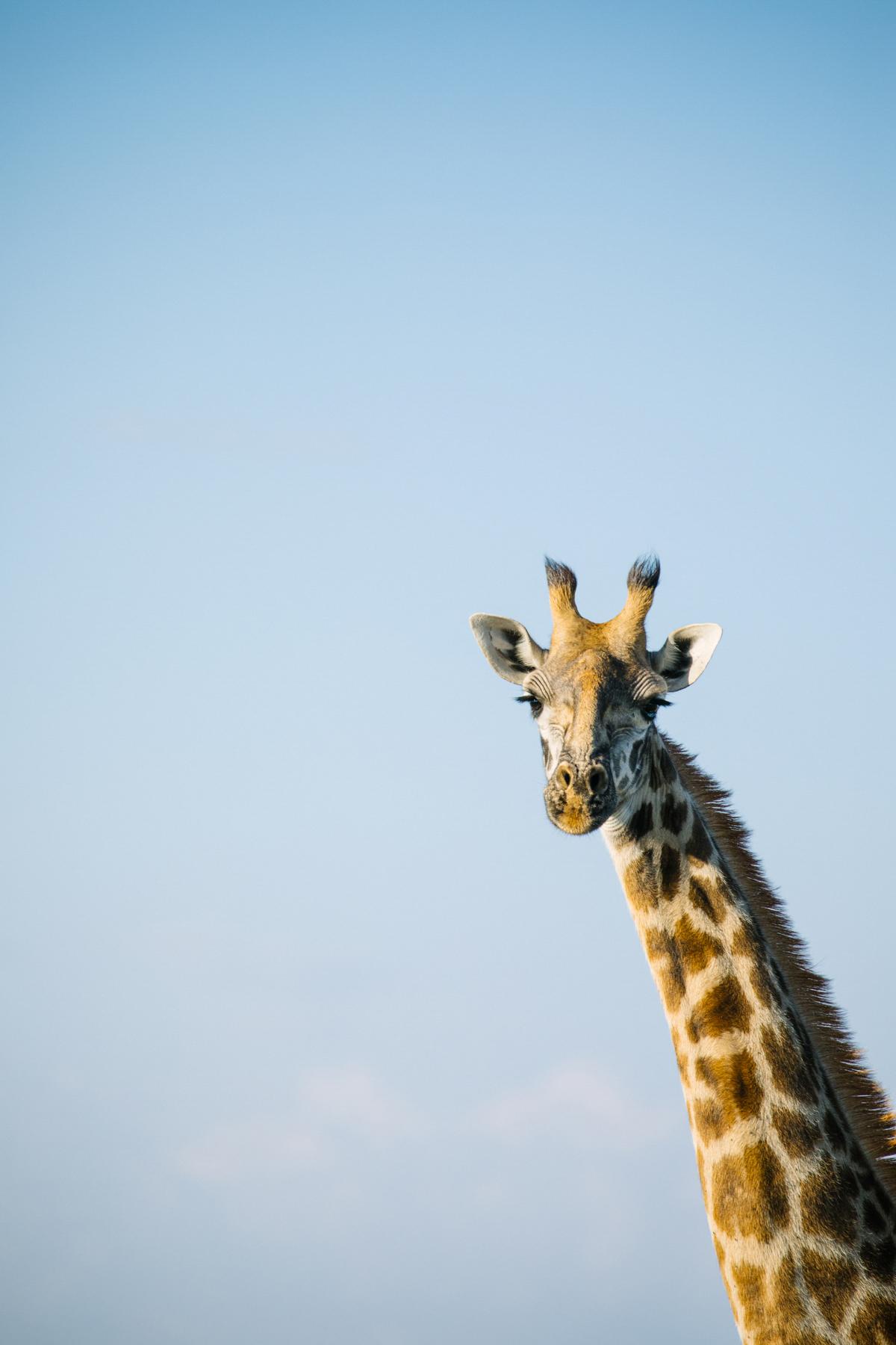 KenyaFeb2019_Safari-106.jpg