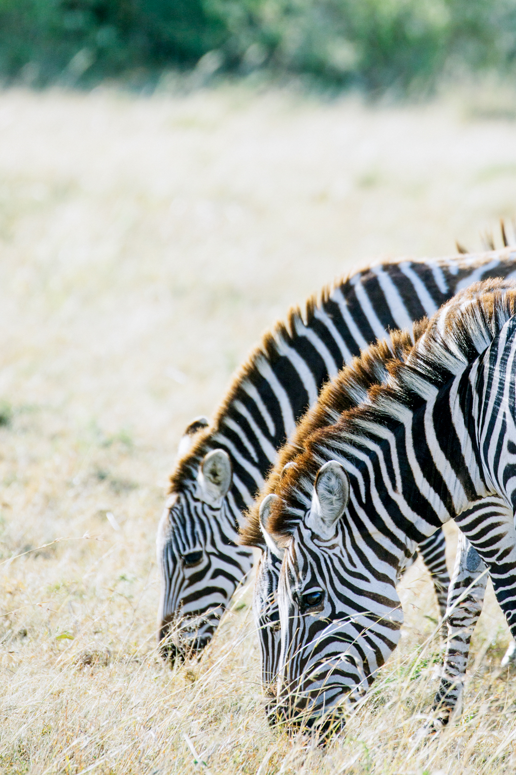 KenyaFeb2019_Safari-118.jpg