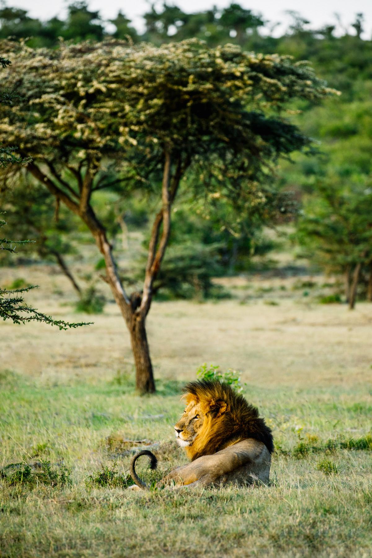 KenyaFeb2019_Safari-185.jpg