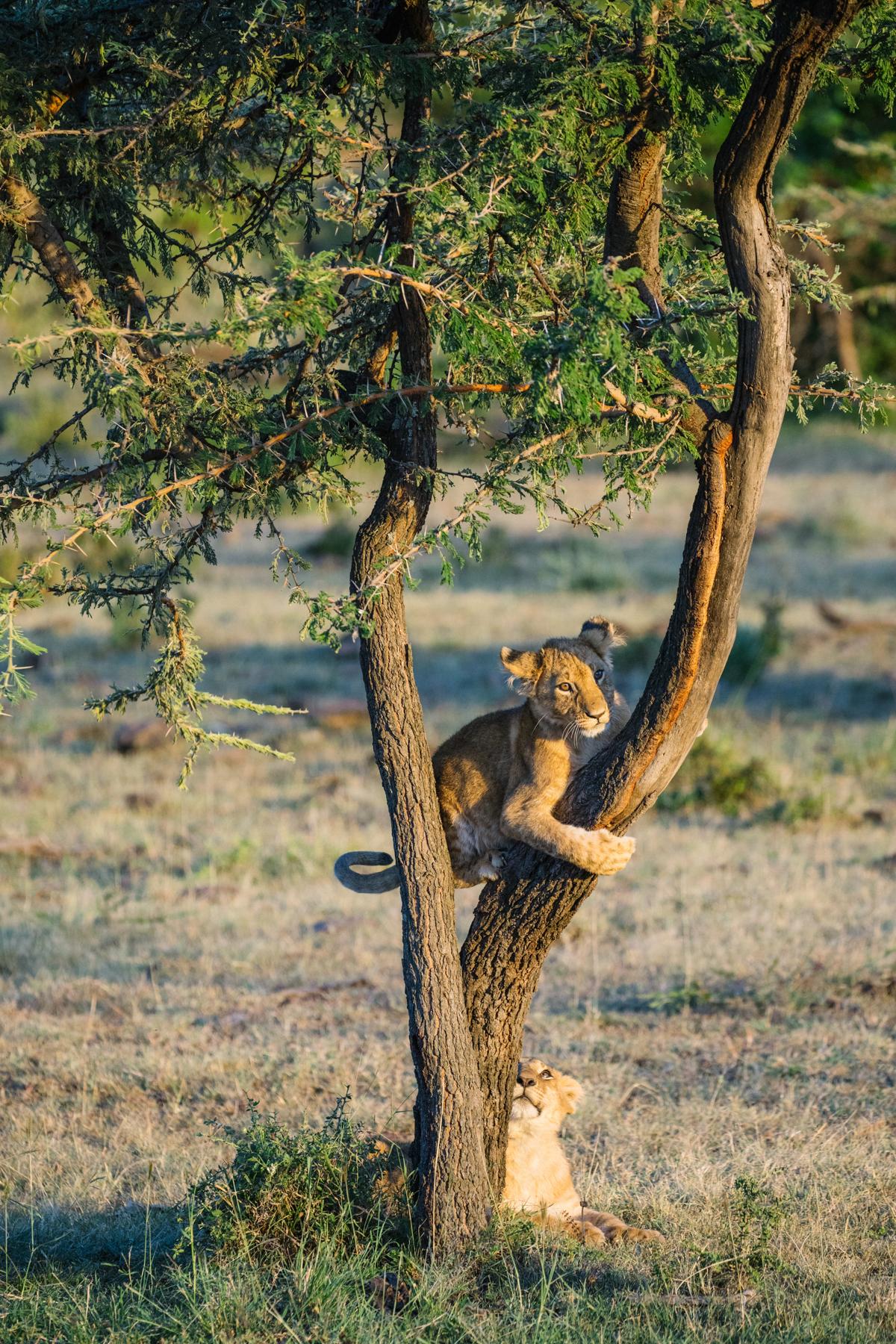 KenyaFeb2019_Safari-192.jpg