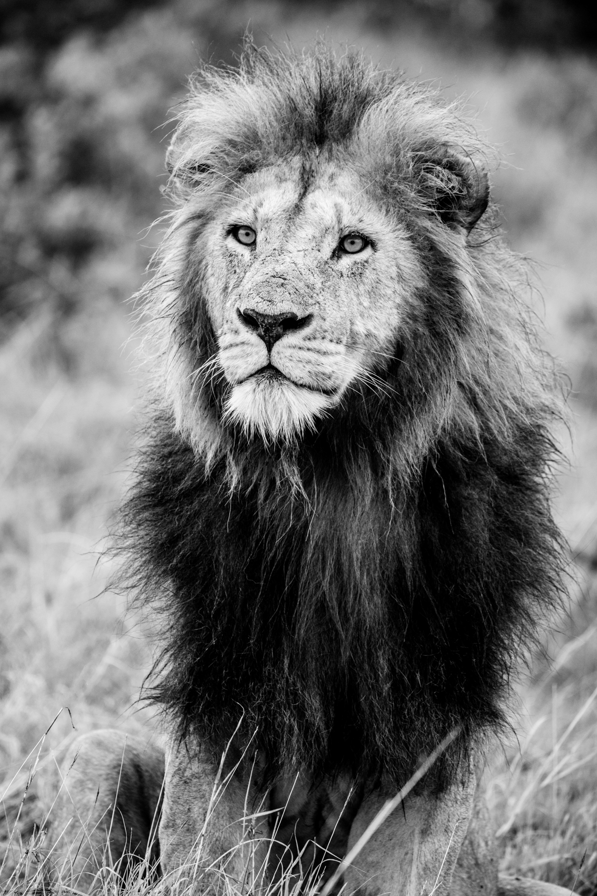 KenyaFeb2019_Safari-245.jpg